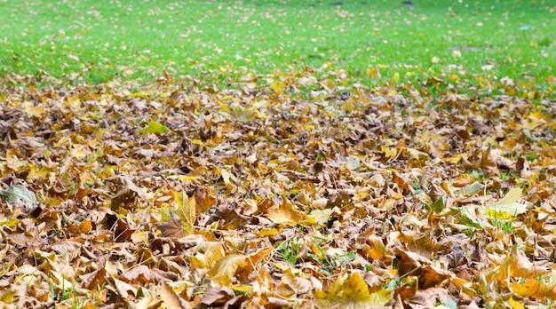 Fundo de outono de grama verde com folhas abscissadas