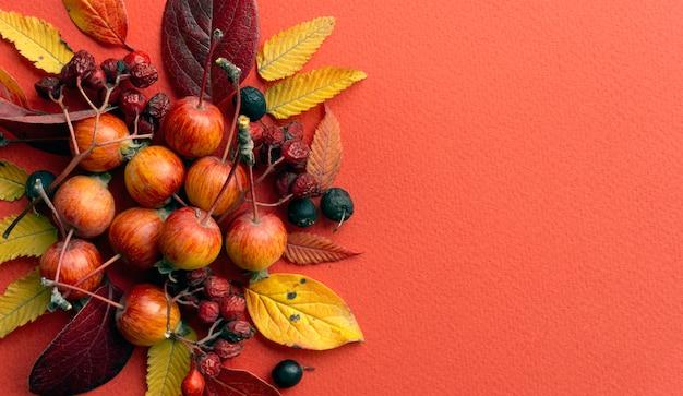 Fundo de outono. folhas de outono em um fundo vermelho