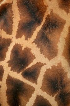 Fundo de padrão de girafa de textura