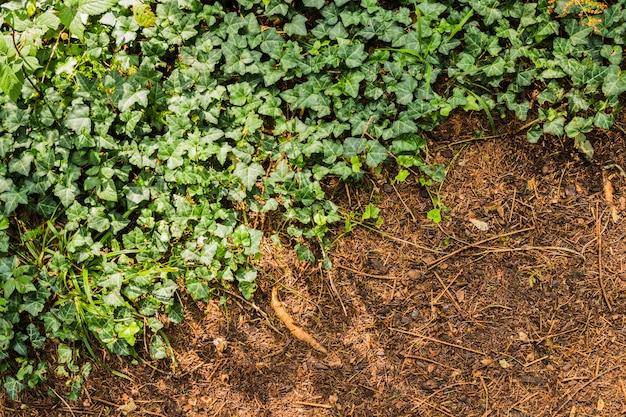 Fundo de padrão natural de plantas verdes