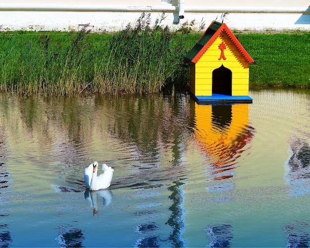 Fundo de paisagem de água de swan em hd
