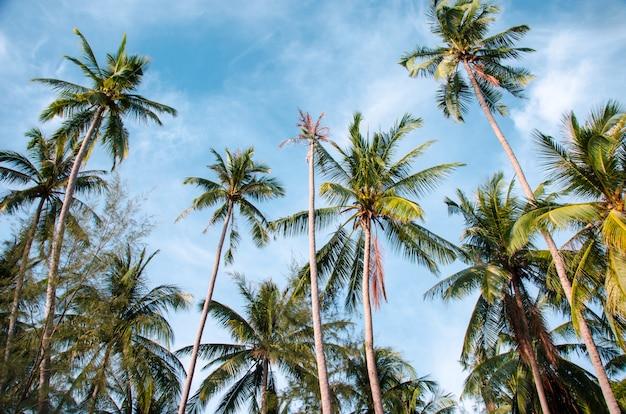 Fundo de palmas vintage