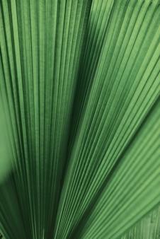 Fundo de palmeira com folhas onduladas