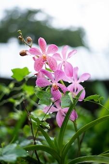Fundo de pano de fundo orquídea branca