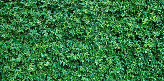 Fundo de parede de folhas verdes, fundo de natureza de parede de folha