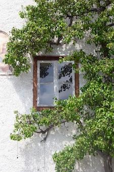 Fundo de parede planta abstrata, a planta trepadeira verde na parede de casa velha grunge