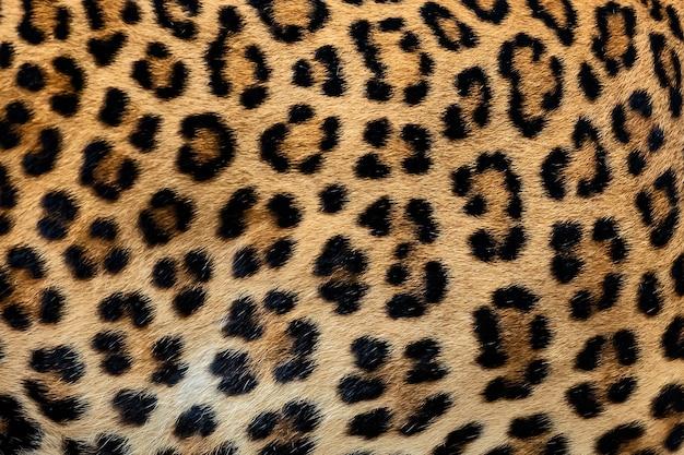 Fundo de pele de leopardo (pele real)