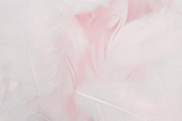 Fundo de pena rosa suave.