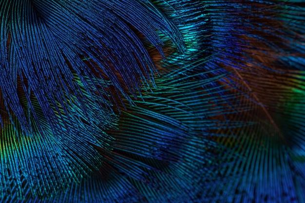 Fundo de penas azul escuro. fundo de penas de textura exótica, close up.