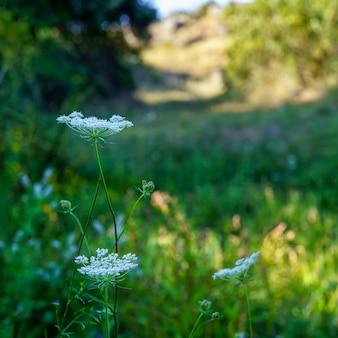 Fundo de pequenas flores silvestres no campo.