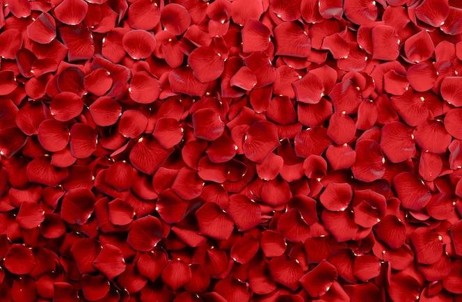 Fundo de pétalas de rosa vermelha