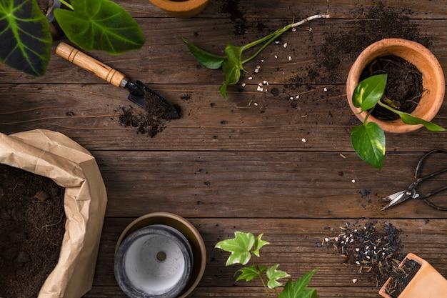 Fundo de planta de madeira com ferramentas de jardinagem para passatempo
