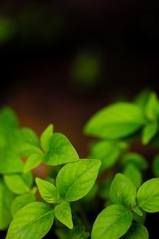 Fundo de planta natural