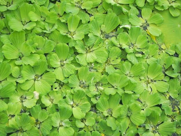 Fundo de plantas aquáticas