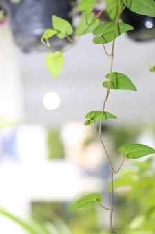 Fundo de plantas de primavera