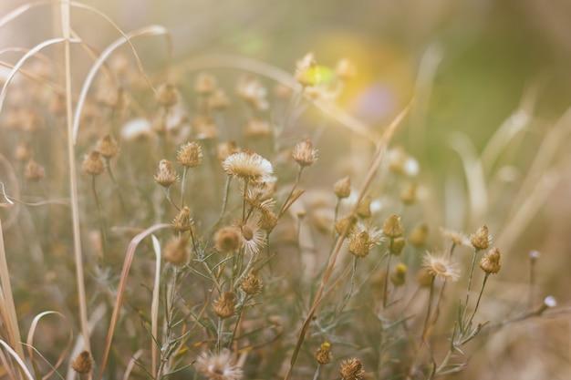 Fundo de plantas e flores do bosque.
