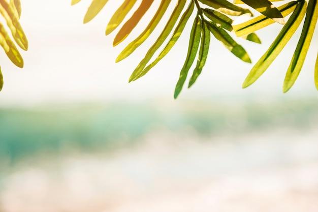 Fundo de praia com folha de palmeira