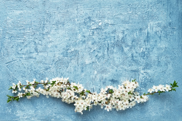 Fundo de primavera. ramo de florescência de árvores de ameixa no fundo azul. copie o espaço, vista de cima.