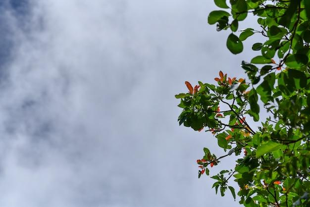 Fundo de primavera verão com árvore verde e céu