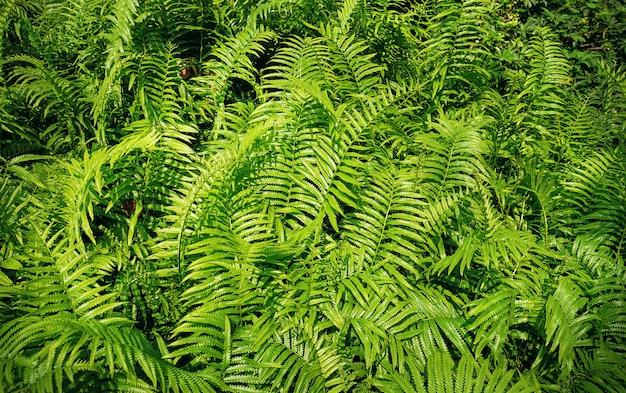 Fundo de quadro completo de folhas de samambaia verde fresco