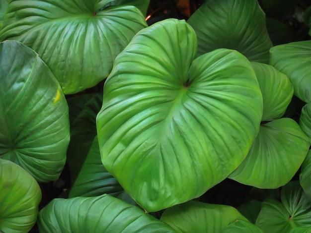 Fundo de quadro completo de folhas verdes no jardim com foco seletivo