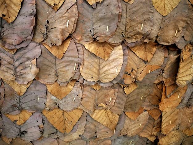 Fundo de quadro completo do tradicional seco marrom deixa parede