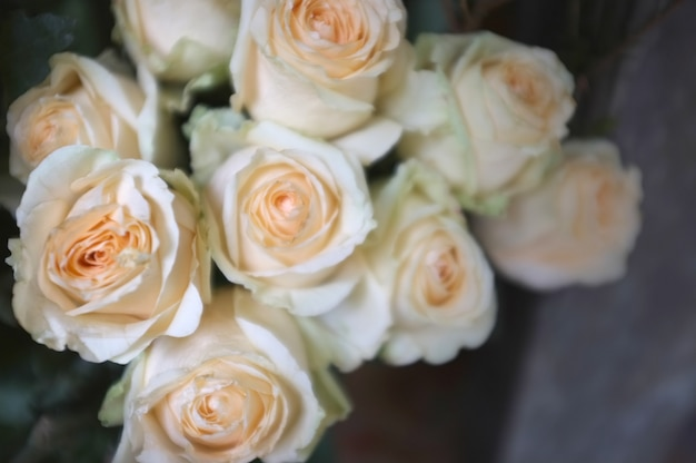 Fundo de rosas cor de rosa brilhantes