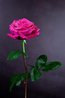 Fundo de rosas vermelhas naturais.