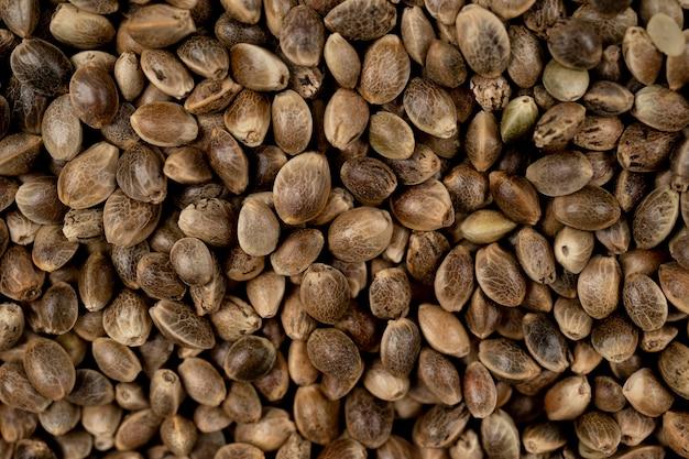 Fundo de sementes de cânhamo em macro foto close up de sementes de cânhamo maconha medicinal