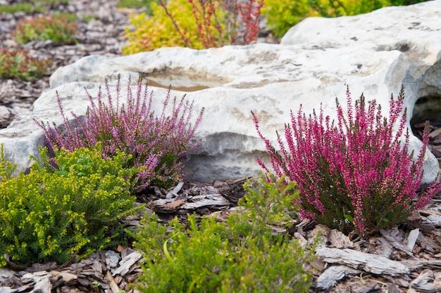Fundo de slide lindo jardim alpino