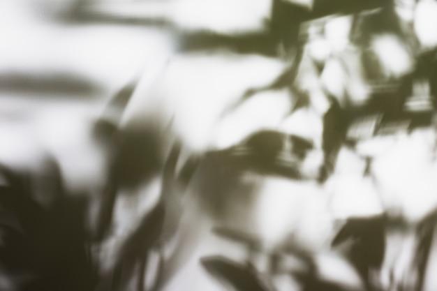 Fundo de sombra de folhas de palmeira natural