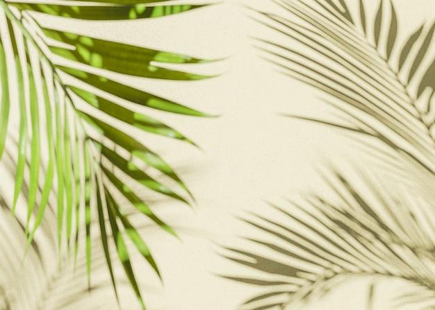 Fundo de sombra de palma
