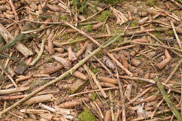 Fundo de terra na floresta com ramos de cones de abeto e musgo