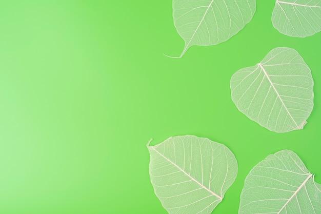 Fundo de textura branca de folha de esqueleto em padrão agradável retroiluminado folhas transparentes