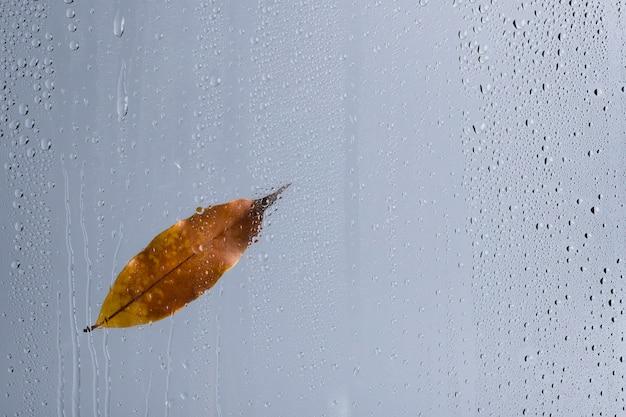 Fundo de textura de água, folha marrom na janela de vidro