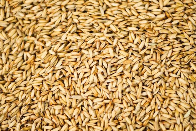 Fundo de textura de arroz em casca, arroz com sementes secas, produtos agrícolas em casca orgânicos