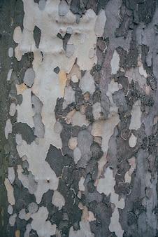 Fundo de textura de árvore de madeira velha