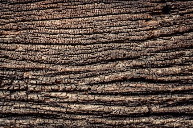 Fundo de textura de casca de árvore. natural.