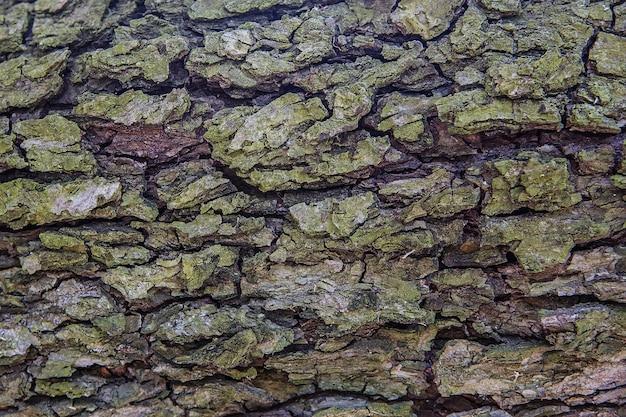 Fundo de textura de casca de árvore. padrão de textura de tronco de árvore de madeira velha
