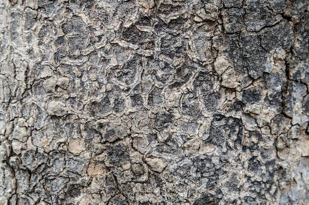 Fundo de textura de casca de árvore