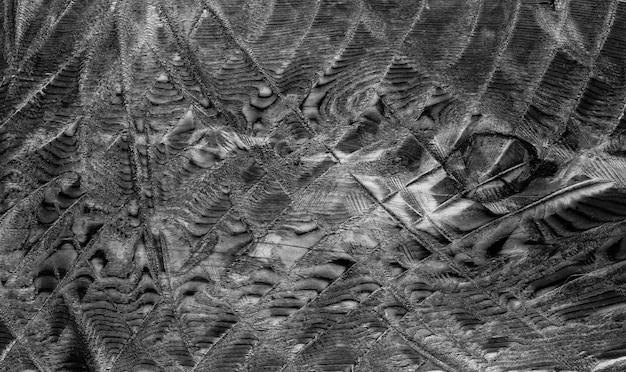 Fundo de textura de casca de madeira preto e branco abstrato incomum