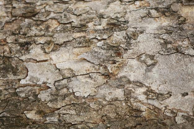 Fundo de textura de casca de madeira