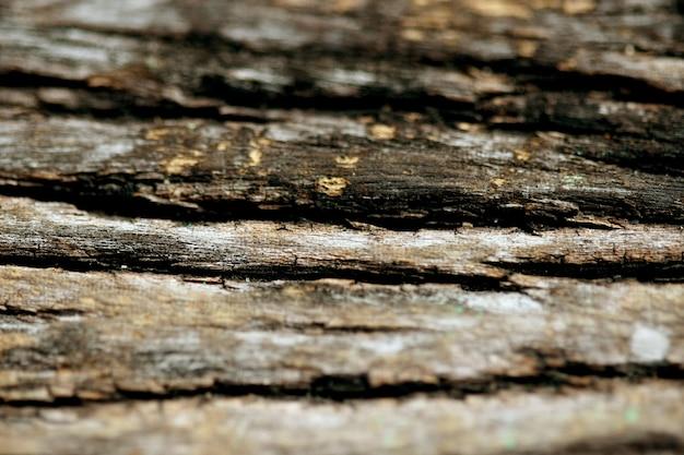 Fundo de textura de casca