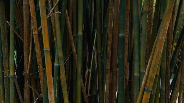 Fundo de textura de cerca de bambu verde e amarelo, panorama de textura de bambu