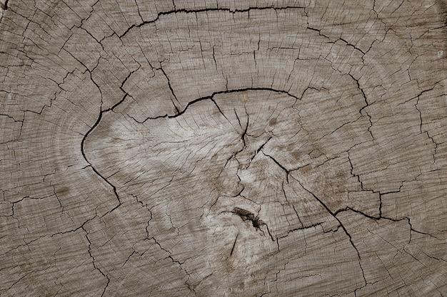 Fundo de textura de corte de tronco de árvore de toras de madeira