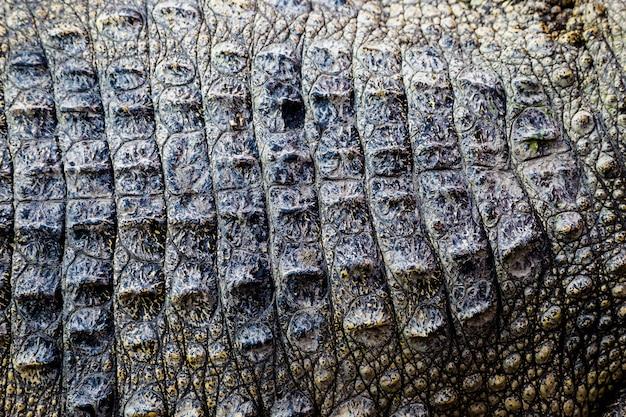 Fundo de textura de couro de crocodilo
