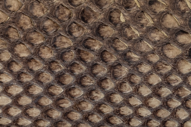 Fundo de textura de couro genuíno de pele de cobra