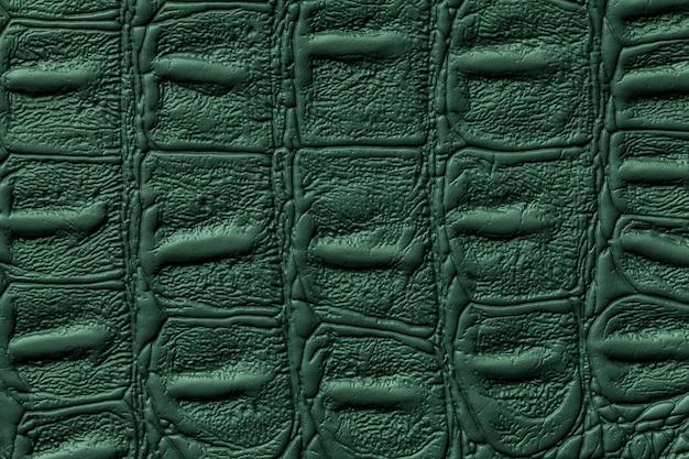 Fundo de textura de couro verde escuro, pele de réptil
