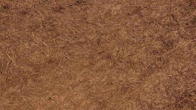 Fundo de textura de feno seco.