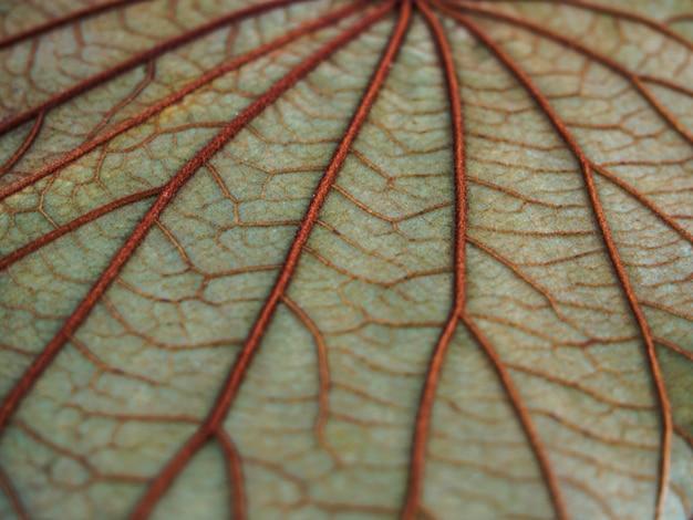 Fundo de textura de folha de borrão